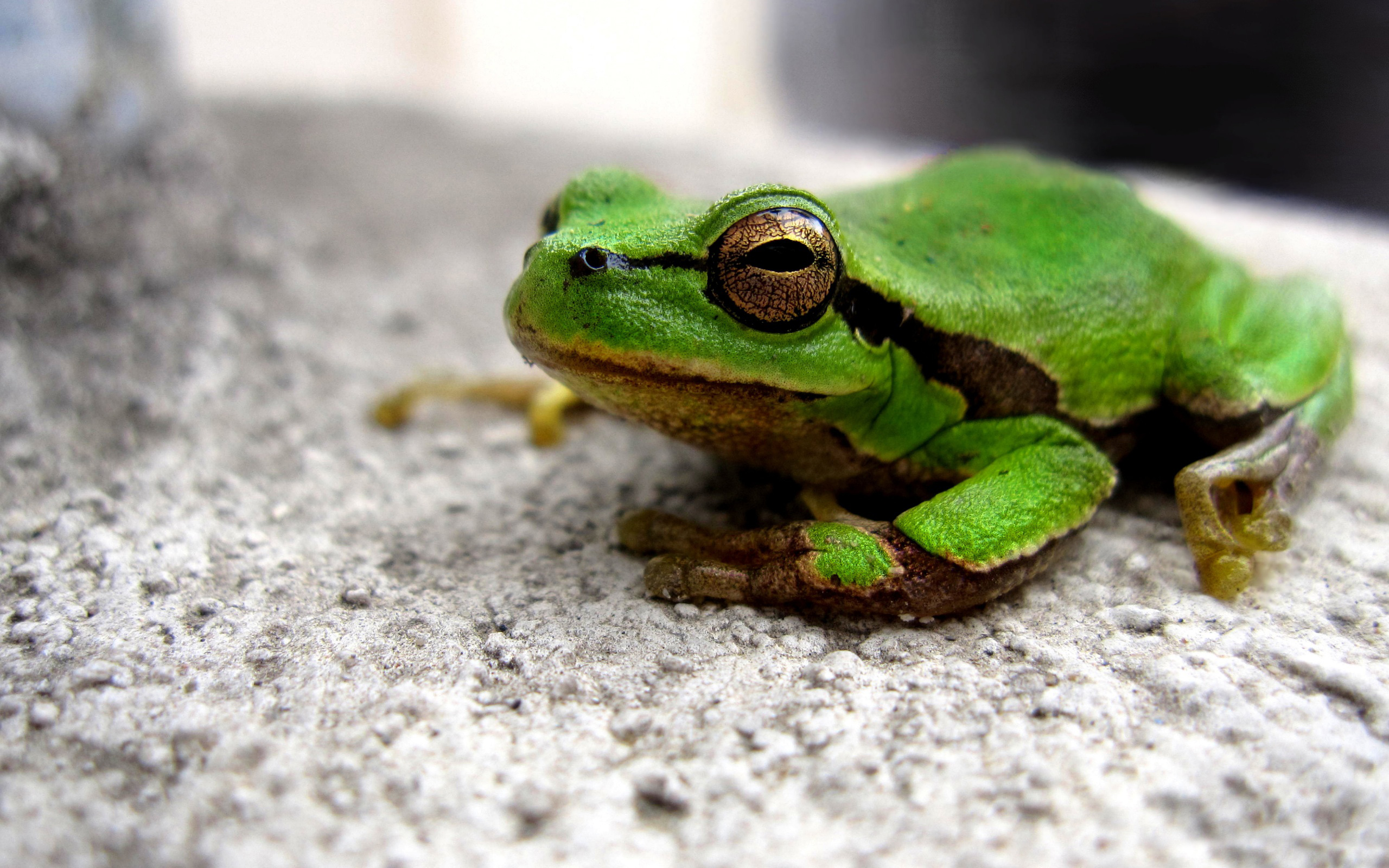 Download free HD Cool Green Frog Picture, image
