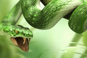 Download 3D Snake HD for Laptop 1366x768 Wallpaper Free Wallpaper on dailyhdwallpaper.com