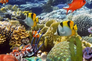 3D Aquarium Desktop Background Wallpaper