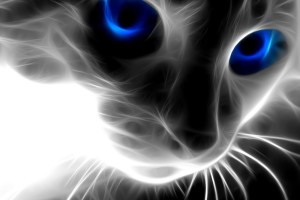 3d Cat Animal  Wallpaper