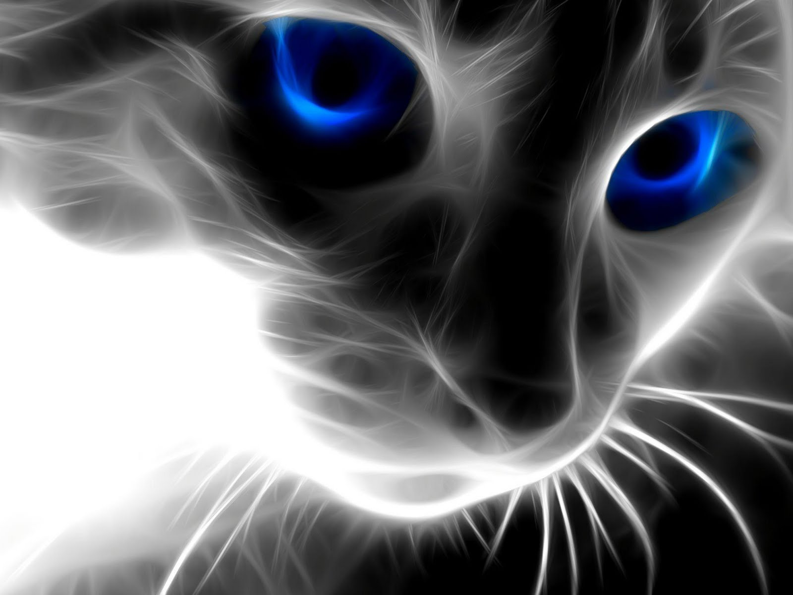 Download free HD 3d Cat Animal  Wallpaper, image