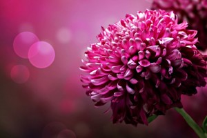 3d Flower Background Free Download Wallpaper