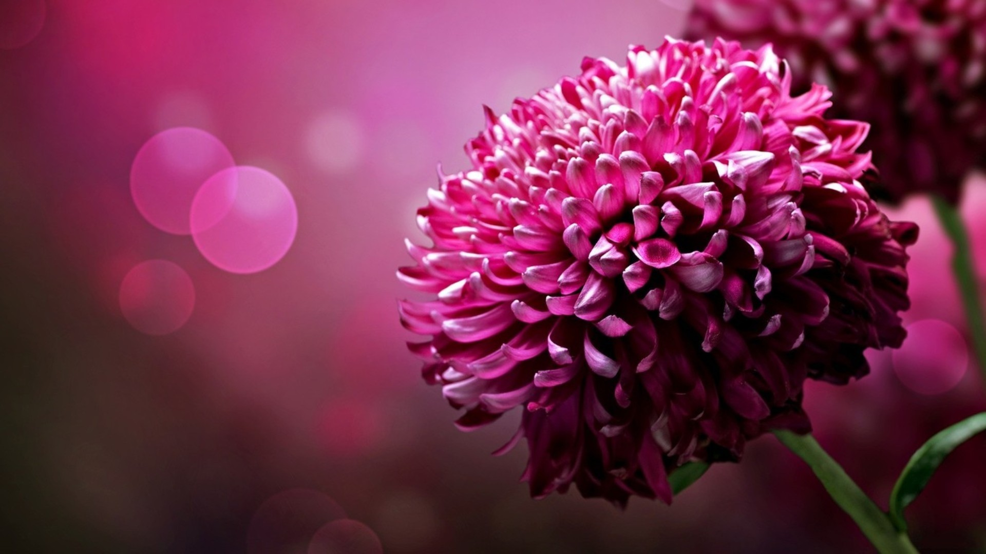 Download free HD 3D Flower Background Wallpaper, image