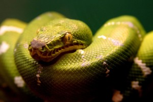 Download A Green Snake Wide Wallpaper Free Wallpaper on dailyhdwallpaper.com