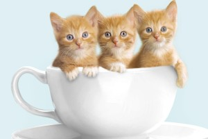 Adorable Cute Cats High Definition Wallpaper