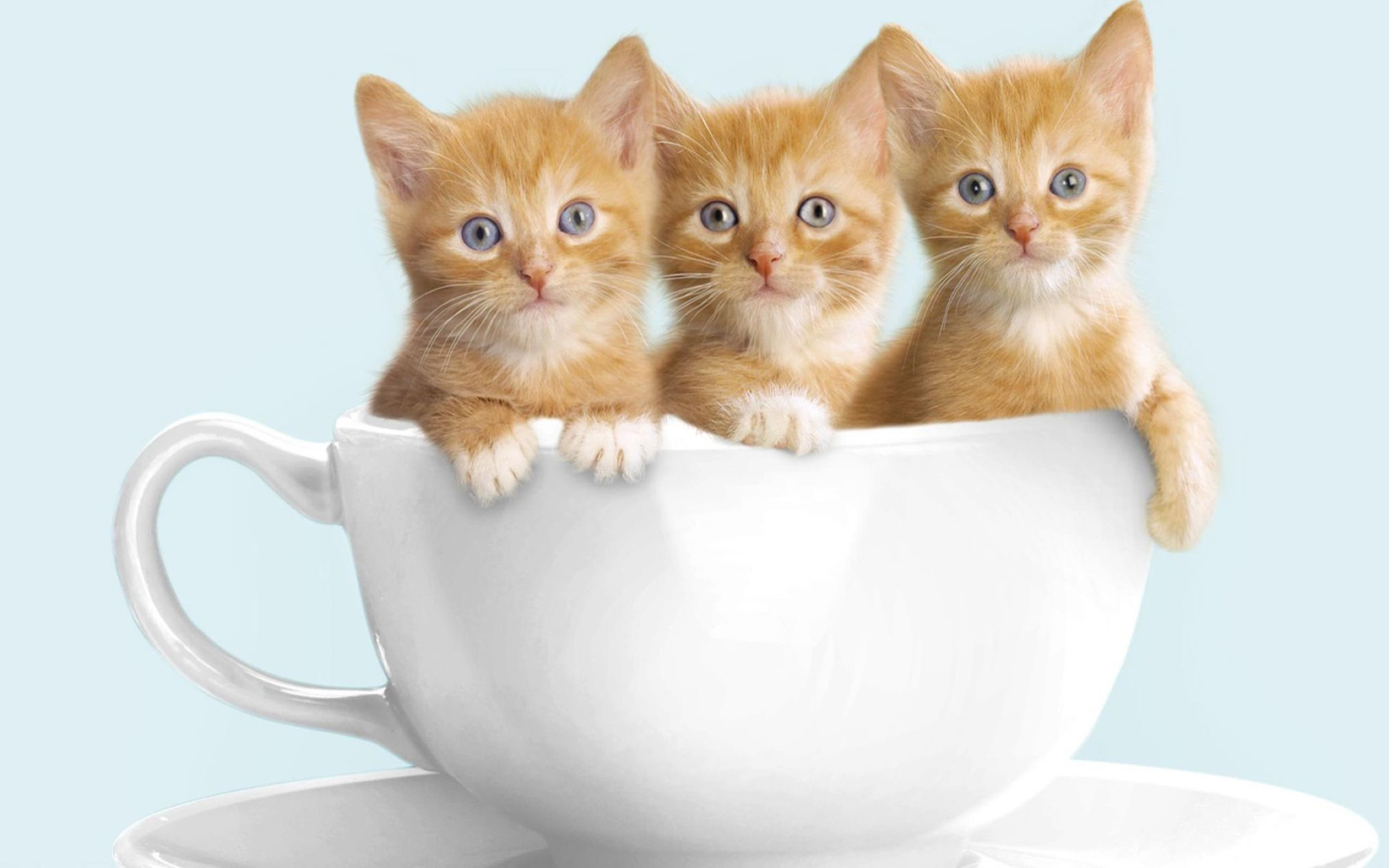 adorable cute cats high definition wallpaper: desktop hd wallpaper