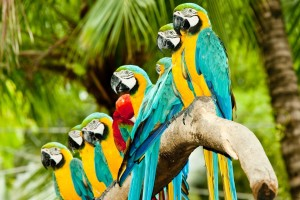 Animal Colorful Birds Hd Desktop Wallpaper