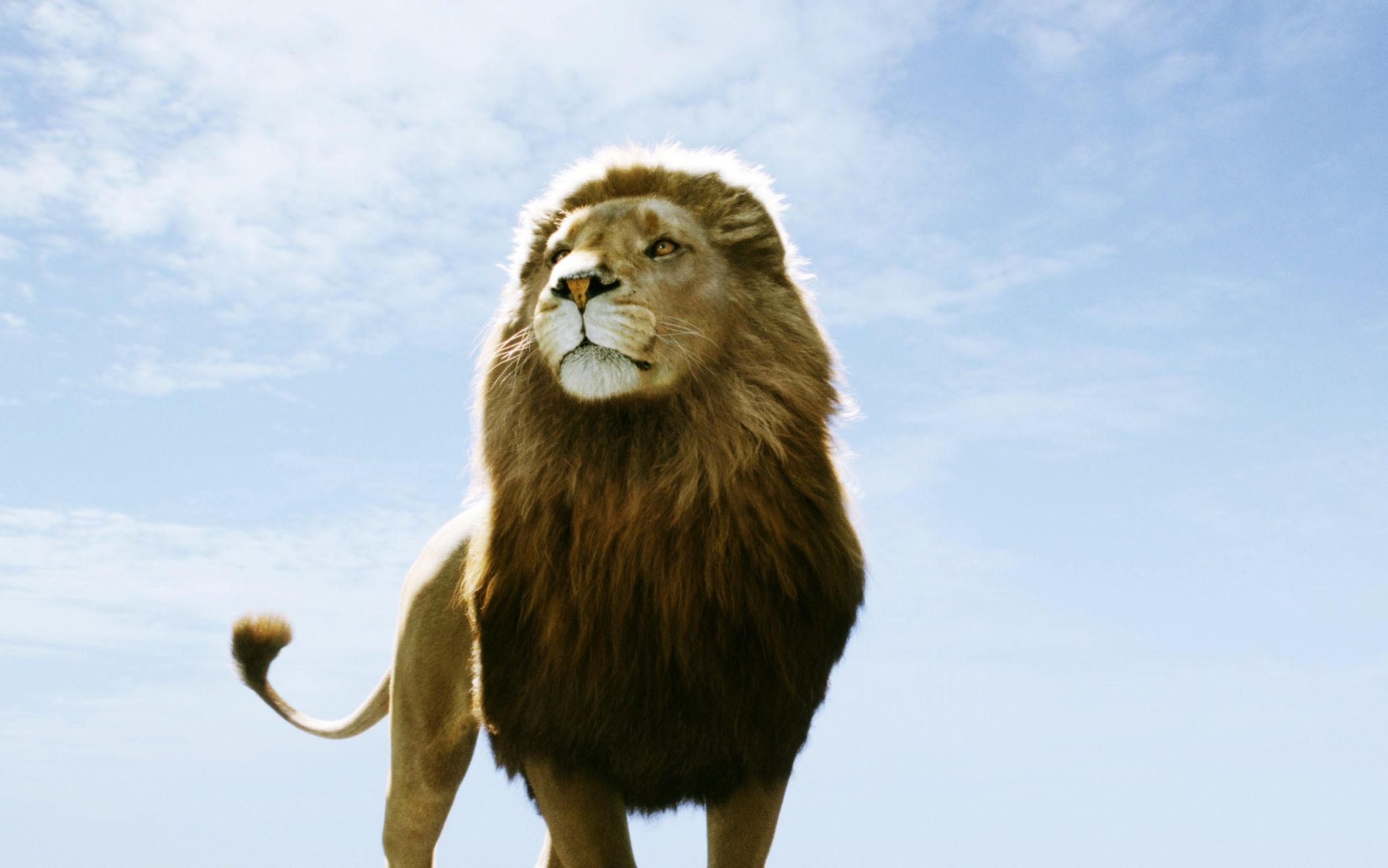 Download free HD Aslan In Narnia Dawn Treader Wide Wallpaper, image