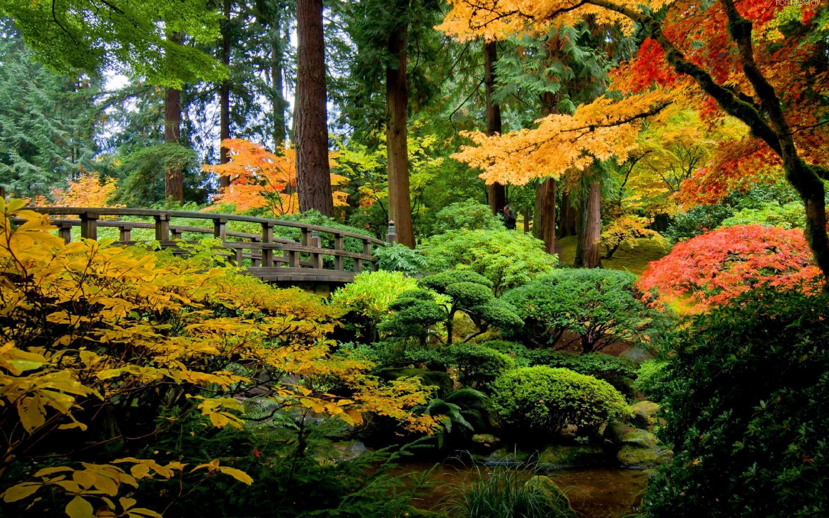 Download free HD Autumn Forest  Wallpaper, image