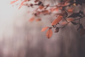 Autumn Macro Nature HD Wallpaper