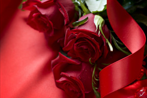 Beautiful 3d Red Rose Download Wallpaper