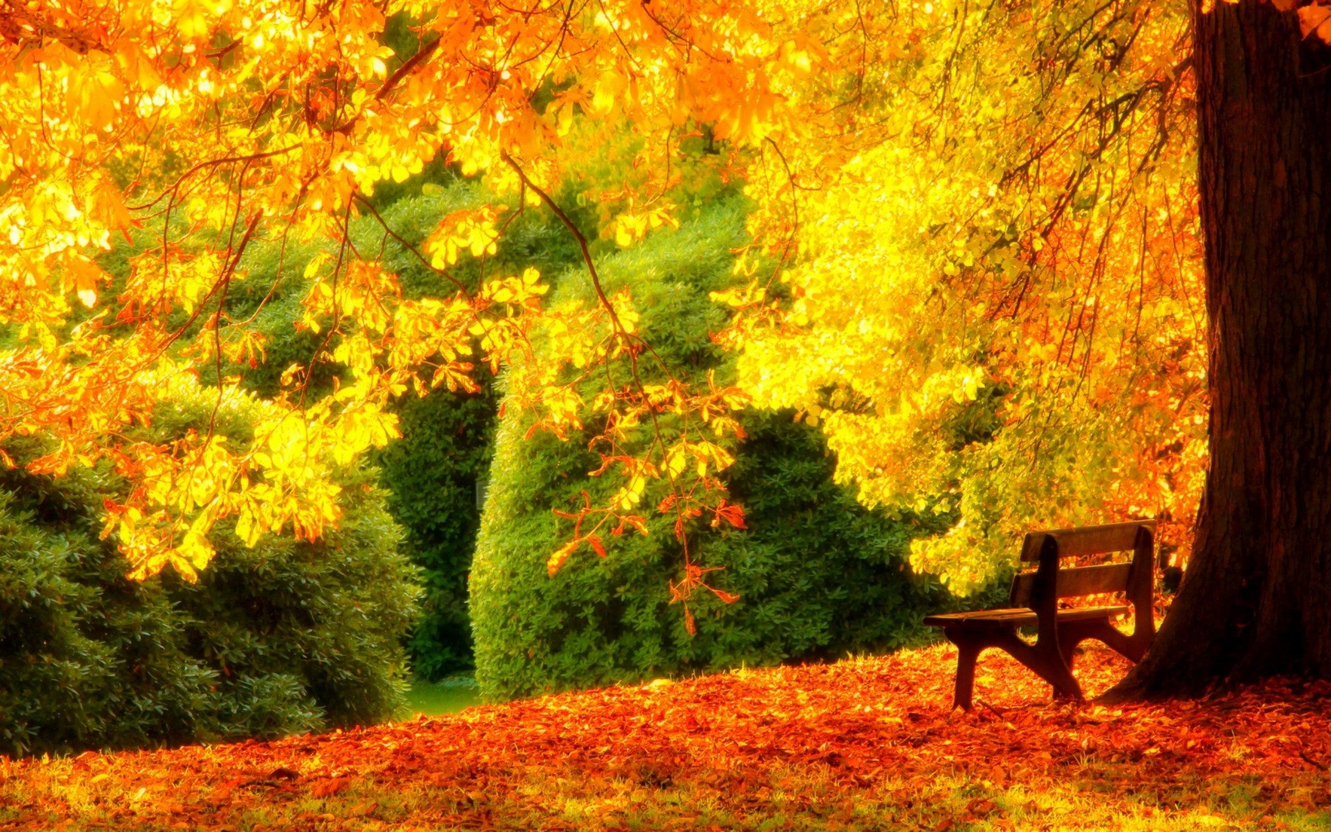 Bench Under Spectacular Yellow Tree Wallpaper