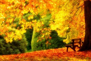 Download Bench Under Spectacular Yellow Tree Wallpaper Free Wallpaper on dailyhdwallpaper.com