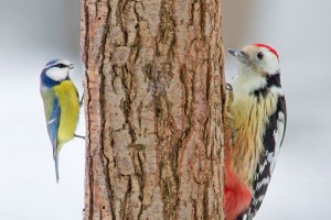 Download Birds Opposite Sides Of Tree Wallpaper Free Wallpaper on dailyhdwallpaper.com
