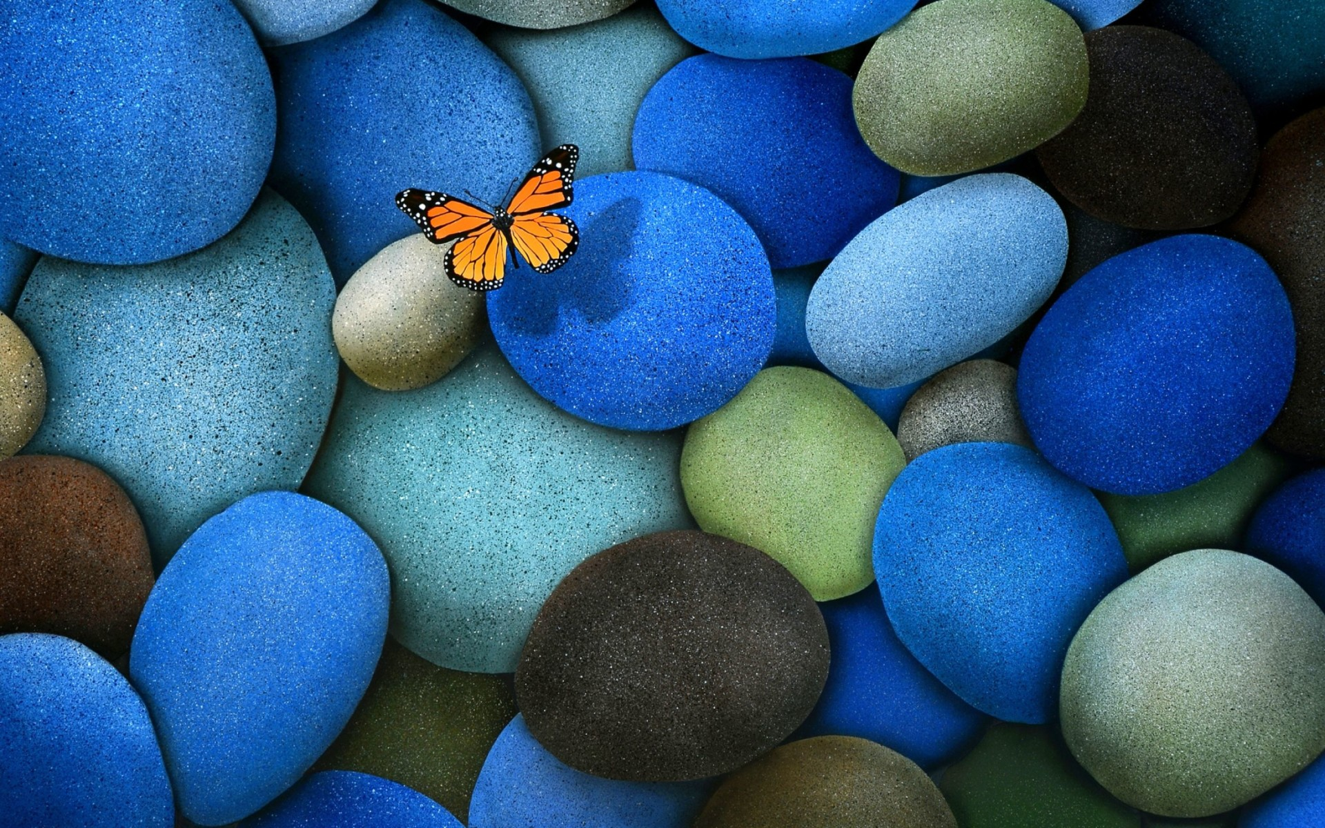 Butterfly On Coloured Stones Wallpaper