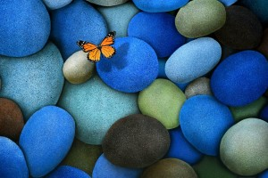 Download Butterfly On Coloured Stones Wallpaper Free Wallpaper on dailyhdwallpaper.com