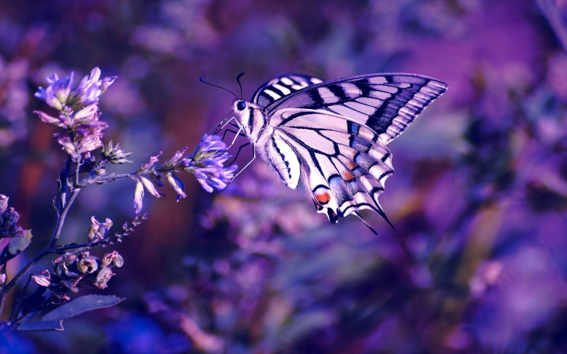 Butterfly On The Flowers Wallpaper