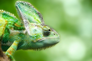 Download Chameleon Forest Lizard Wide Wallpaper Free Wallpaper on dailyhdwallpaper.com