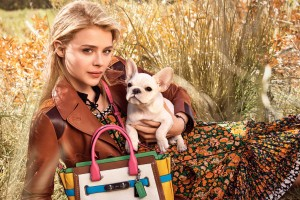 Download Chloe Moretz 56 Wide Wallpaper Free Wallpaper on dailyhdwallpaper.com