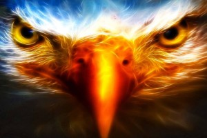 Download Cool Eagle Animal Backgrounds Hd Wallpaper Free Wallpaper on dailyhdwallpaper.com