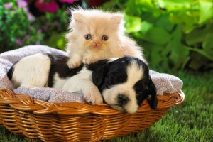 Download Cute Basket Buddies Wide Wallpaper Free Wallpaper on dailyhdwallpaper.com