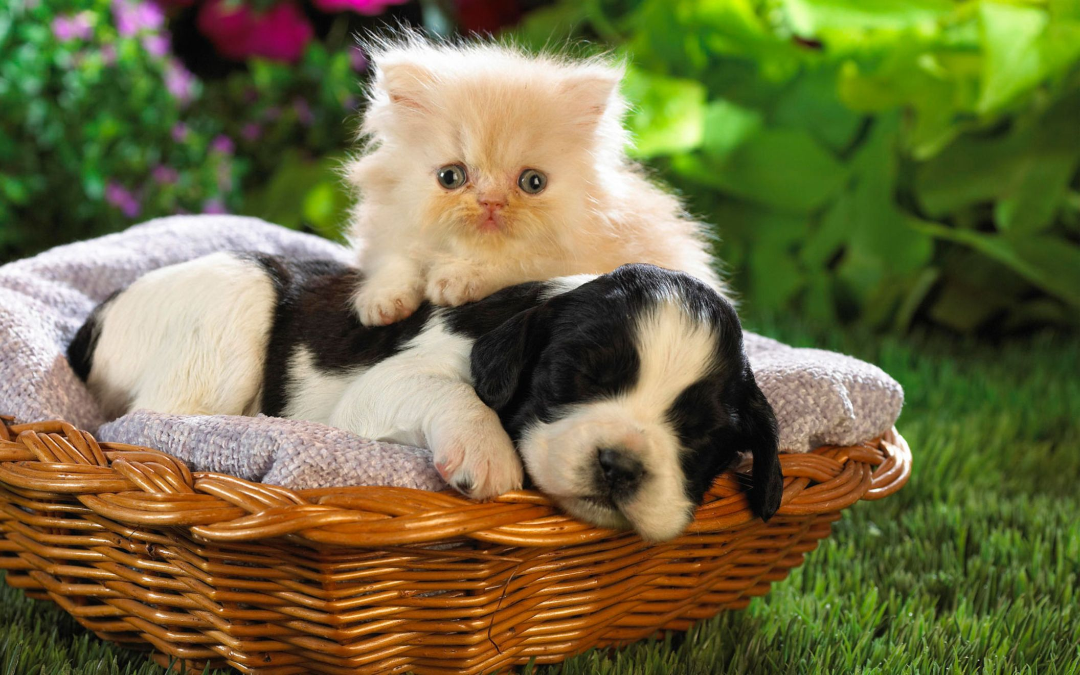 Download free HD Cute Basket Buddies Wide Wallpaper, image
