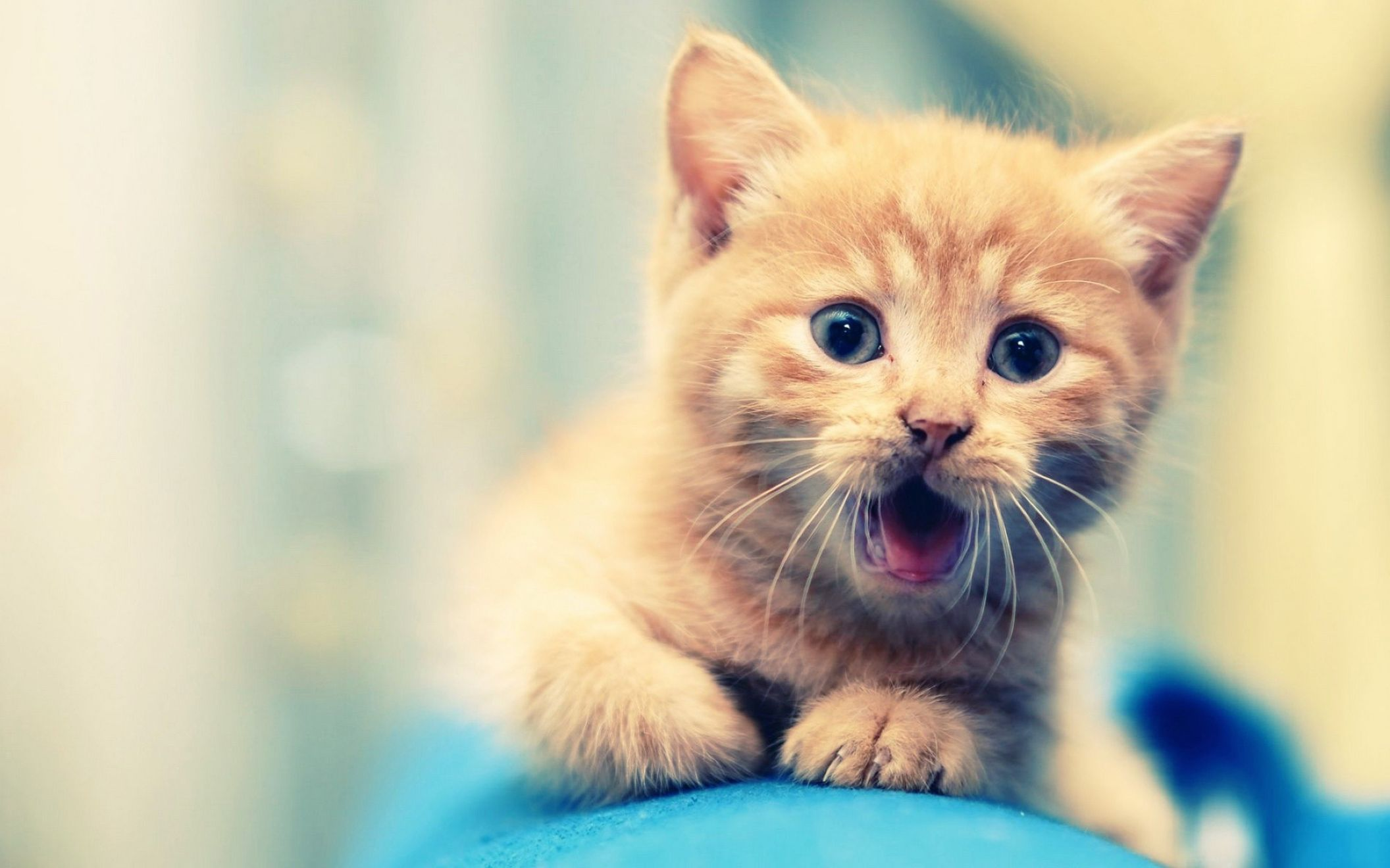 Download free HD Cute Cat Animal for Desktop Background Full Screen Wallpaper, image