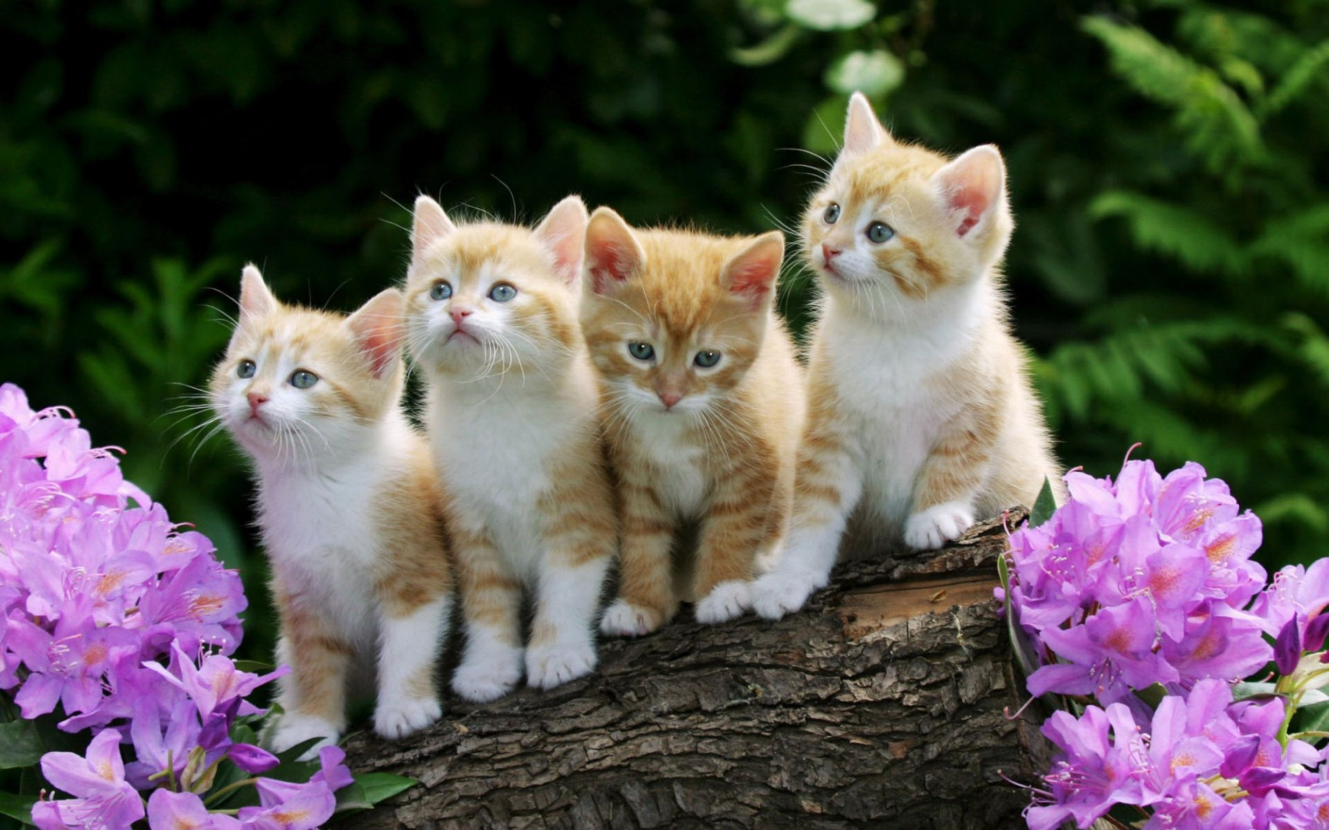 Cute Cats Animal Desktop Wallpaper