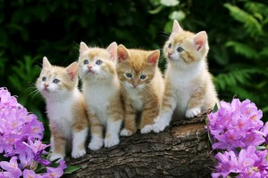 Download Cute Cats Animal Desktop Wallpaper Free Wallpaper on dailyhdwallpaper.com