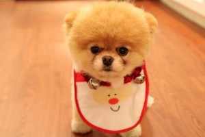 Download Cute Dog Christmas Wide Wallpaper Free Wallpaper on dailyhdwallpaper.com