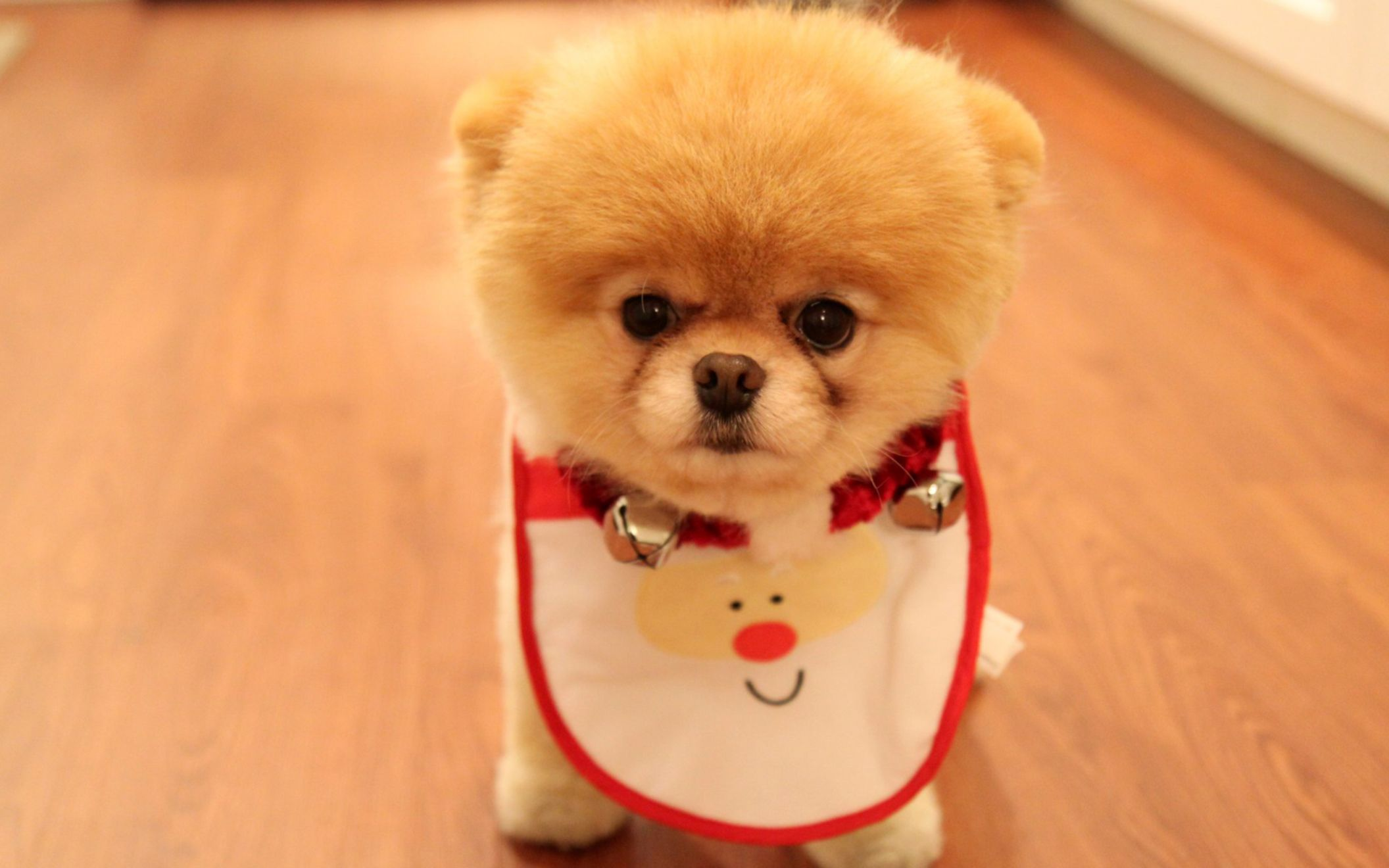 Download free HD Cute Dog Christmas Wide Wallpaper, image
