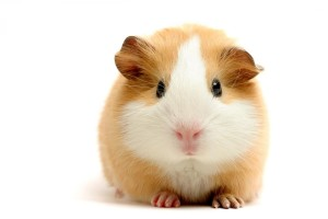 Download Cute Hamster Computer Wallpaper Free Wallpaper on dailyhdwallpaper.com