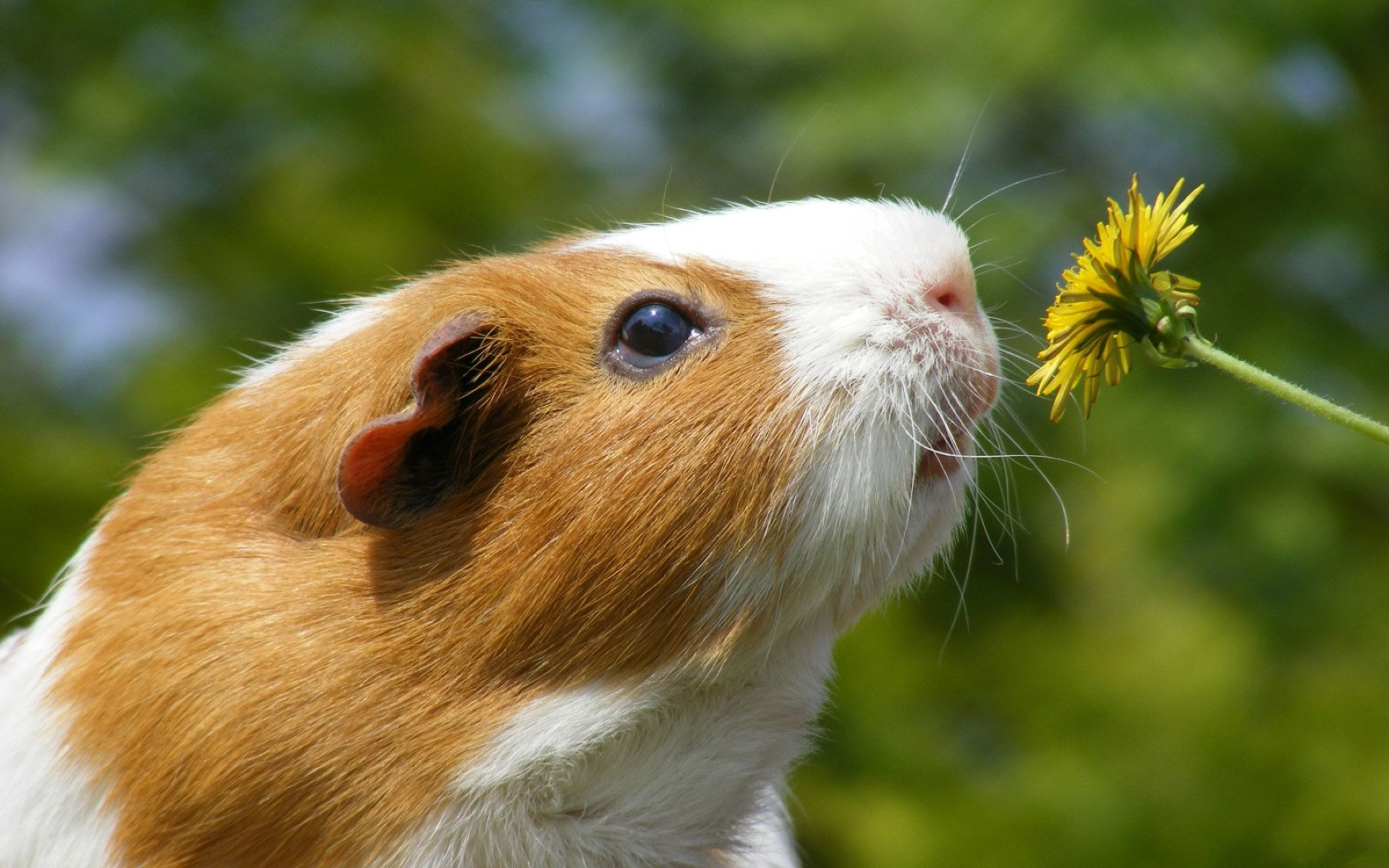 Cute Hamster Hd Wallpaper