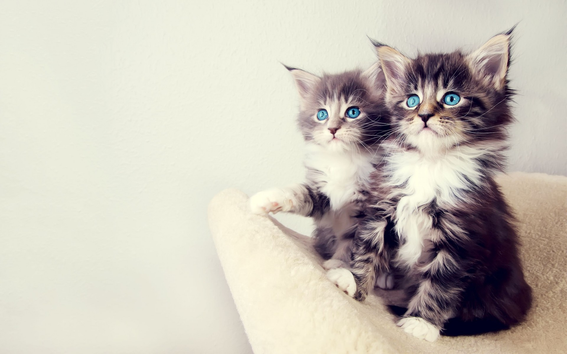 Cute Kittens Wide Wallpaper