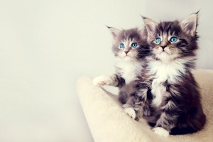Download Cute Kittens Wide Wallpaper Free Wallpaper on dailyhdwallpaper.com
