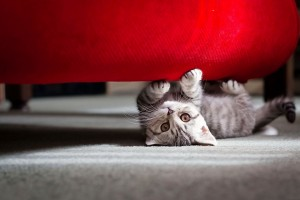 Download Cute Little Cat Wide Wallpaper Free Wallpaper on dailyhdwallpaper.com