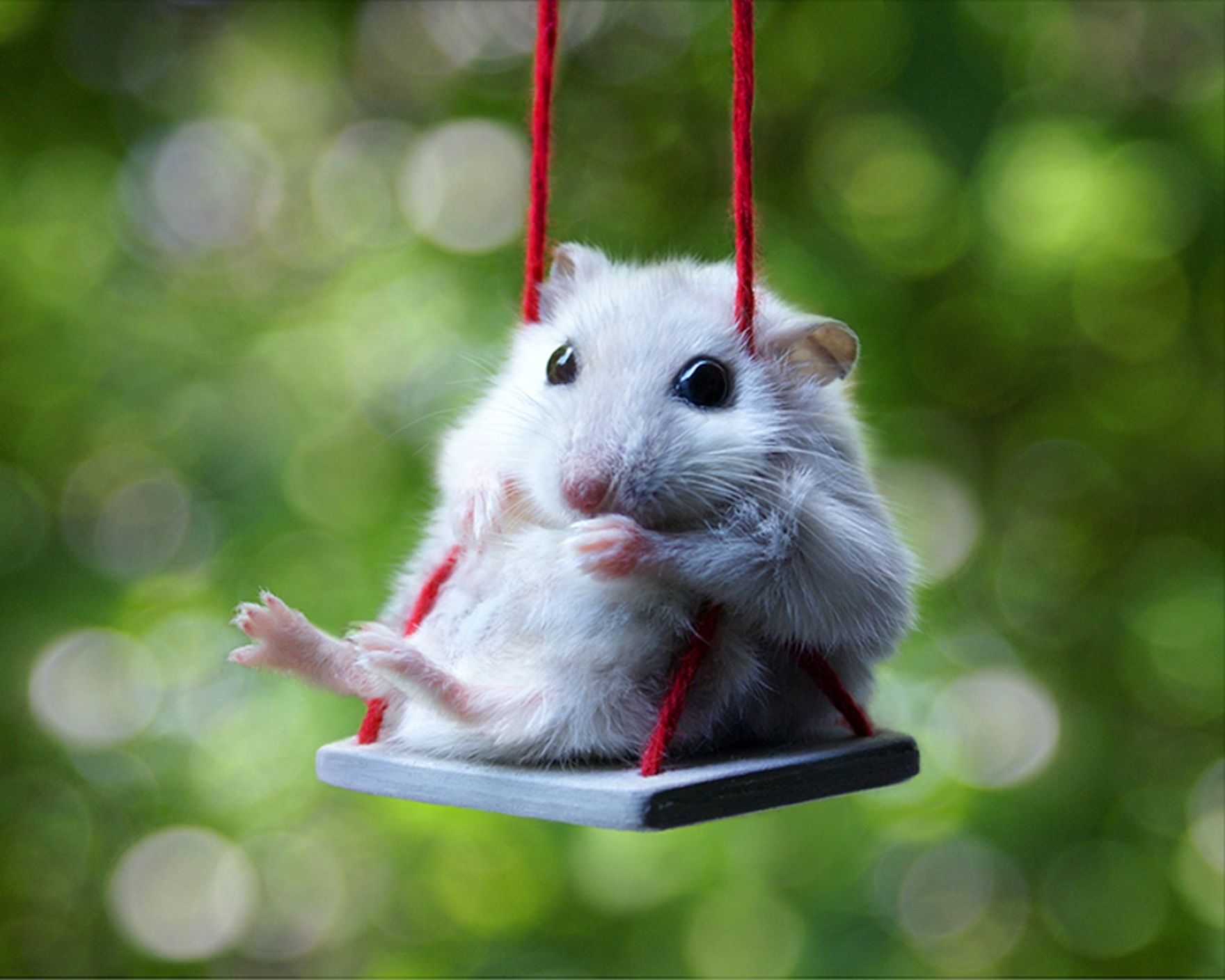 Download free HD Cute White Hamster Computer Wallpaper, image