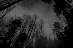 Dark Nature Black Background HD Wallpaper