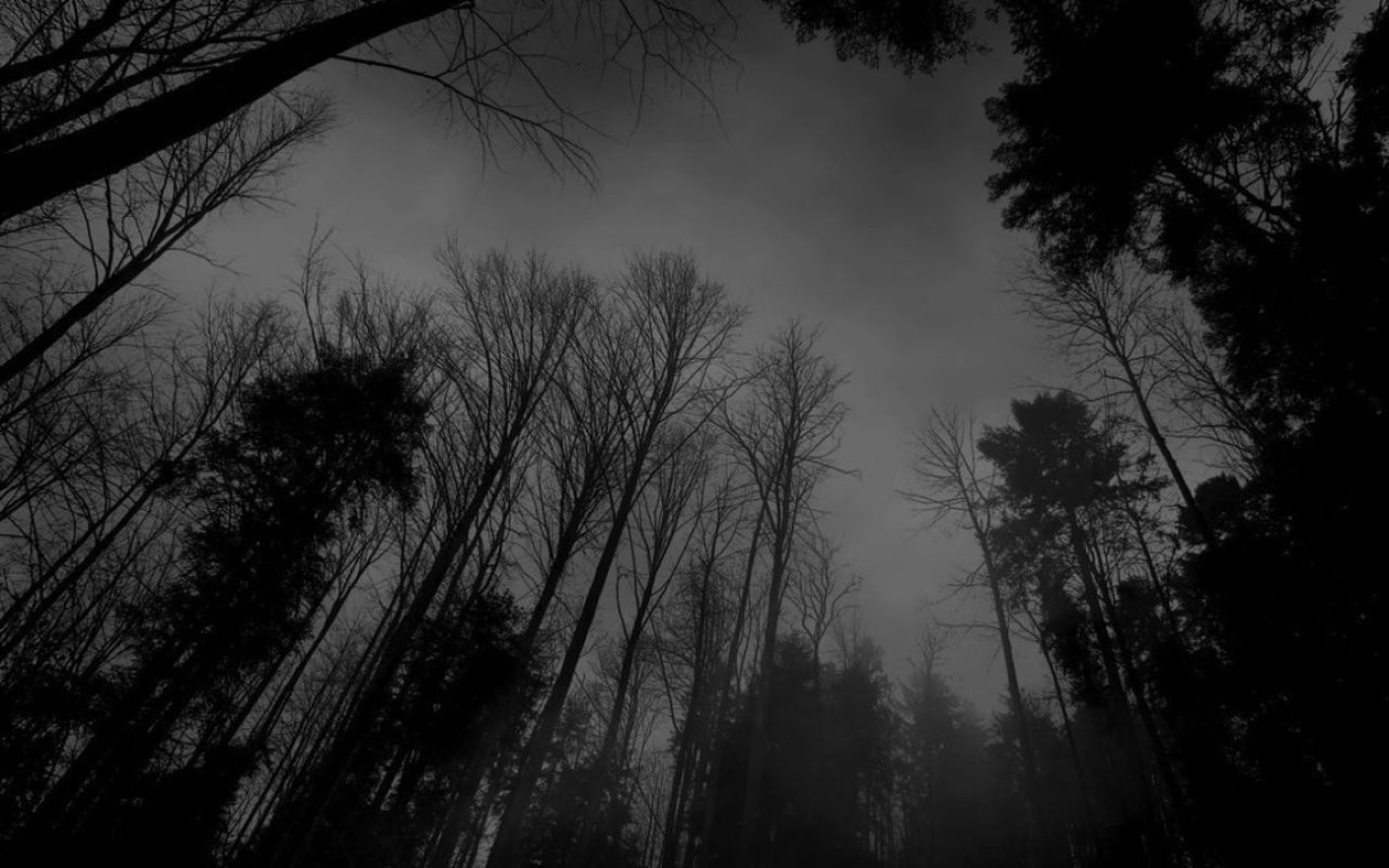 Dark Nature Black Background Hd Wallpaper Desktop Hd Wallpaper
