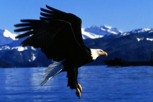 Easy Landing Alaska Normal Wallpaper