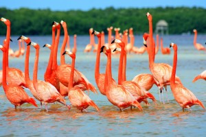 Download Flamingo Birds In Water Wallpaper Free Wallpaper on dailyhdwallpaper.com