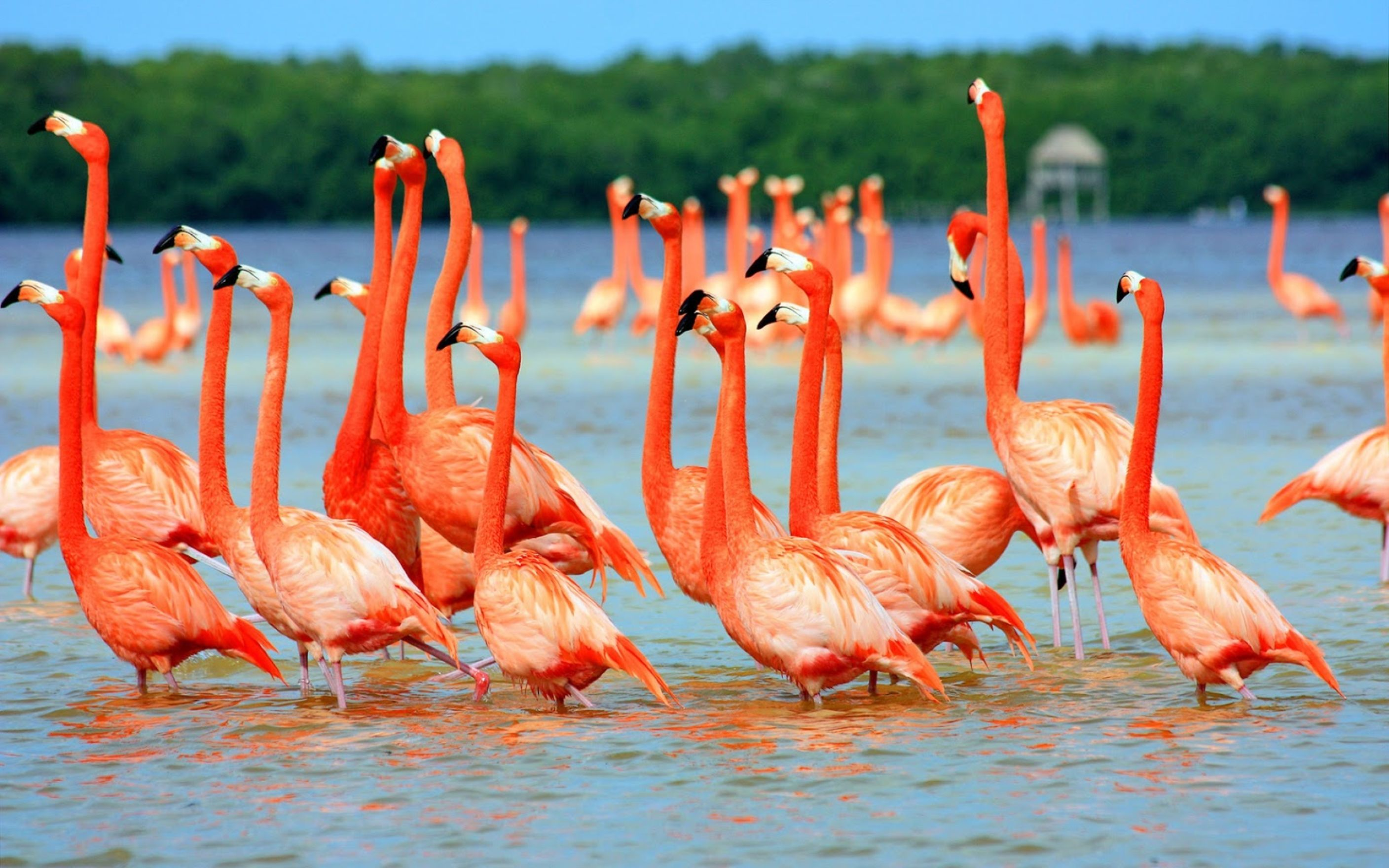 Download free HD Flamingo Birds In Water Wallpaper, image