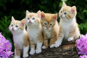 Download Four Cute Cats On A Branch Wallpaper Free Wallpaper on dailyhdwallpaper.com