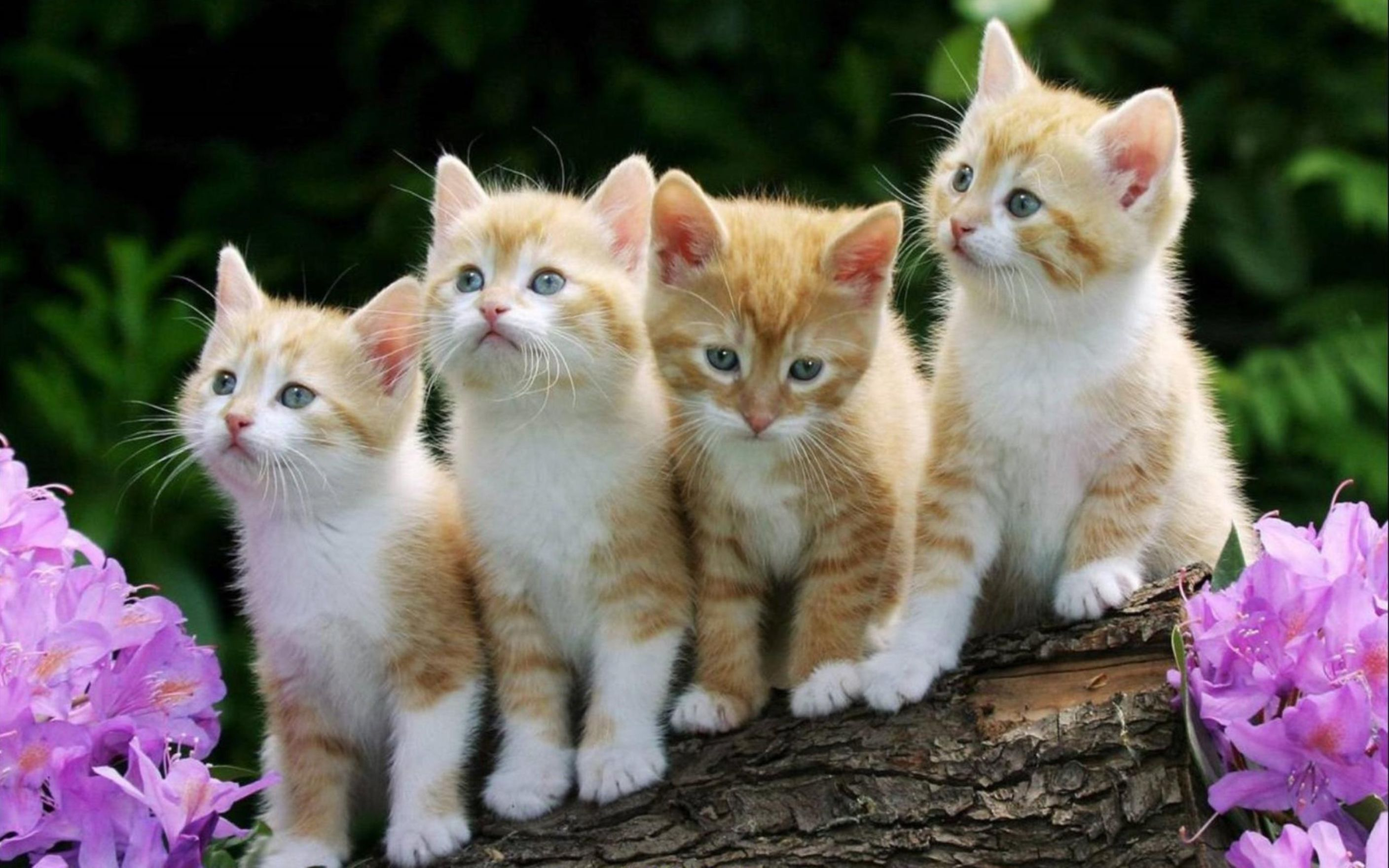 four cute cats on a branch wallpaper: desktop hd wallpaper