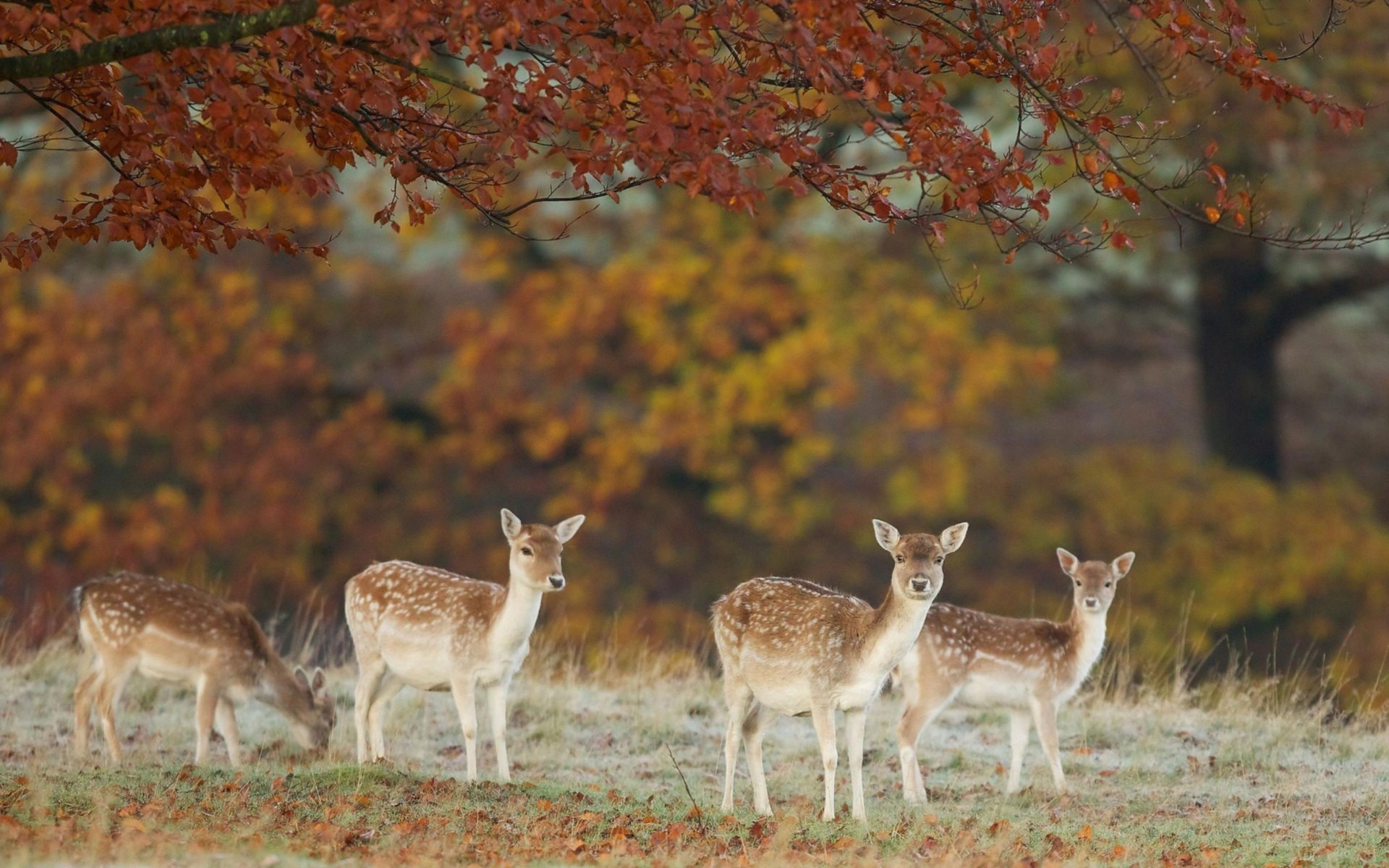 Four Deers In The Dry Forest Wallpaper