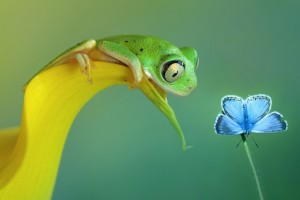 Download Funny Frog And Butterfly Macro Full HD Wallpaper Free Wallpaper on dailyhdwallpaper.com