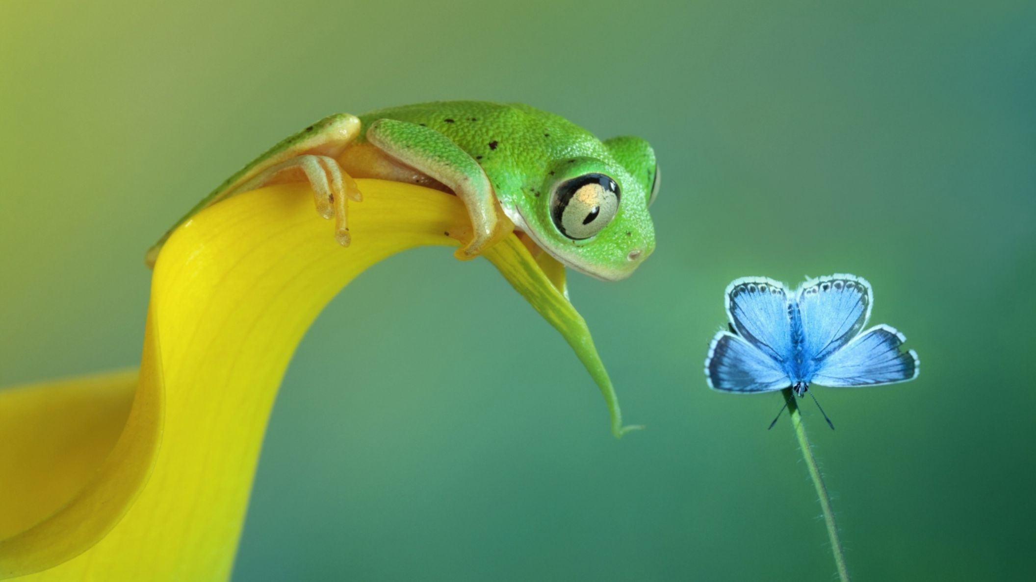 Download free HD Funny Frog And Butterfly Macro Full HD Wallpaper, image
