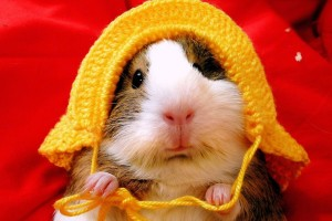 Download Funny Hamster 1600x1200 Wallpaper Free Wallpaper on dailyhdwallpaper.com