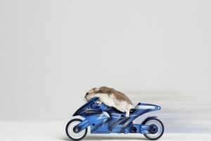 Download Funny Hamster Wallpaper Free Wallpaper on dailyhdwallpaper.com