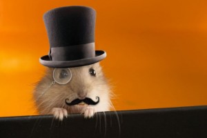 Download Funny Posh Hamster Wallpaper Free Wallpaper on dailyhdwallpaper.com
